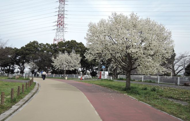 公園のウォーキングコース