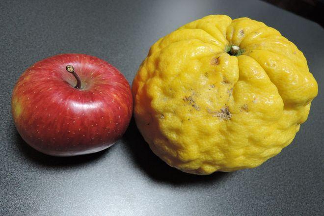 大きな柚子と普通のリンゴ