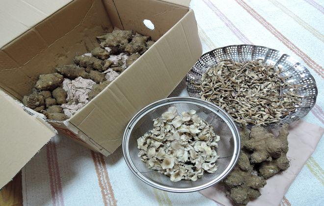 菊芋の保存方法