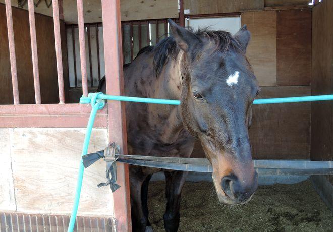馬の顔写真