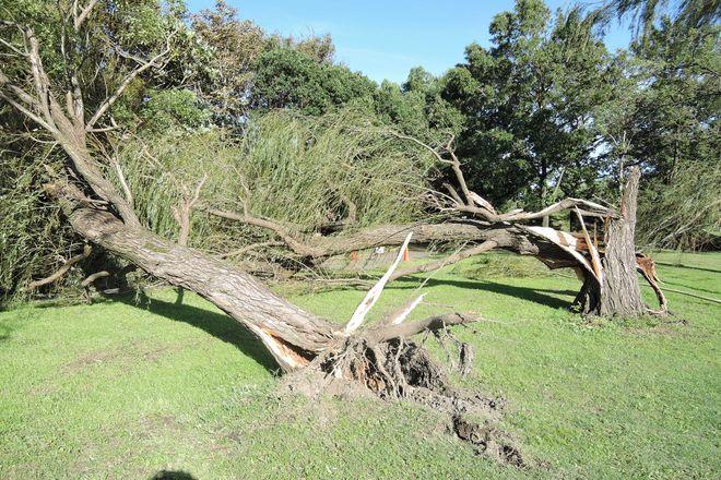 台風の爪跡|折れた木々