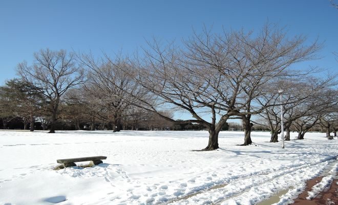 雪景色(県民健康福祉村)-3