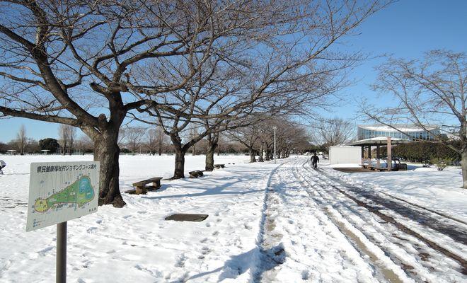 雪景色(県民健康福祉村)-4