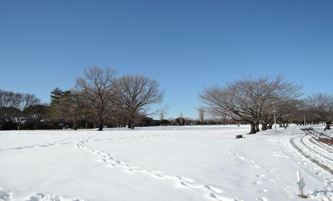 雪景色(県民健康福祉村)-7