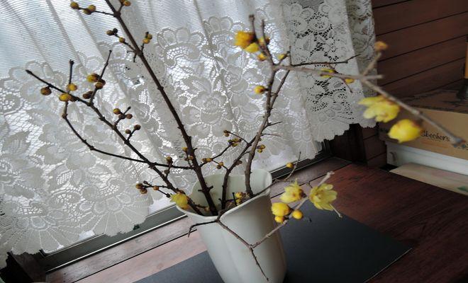 蝋梅(生け花)