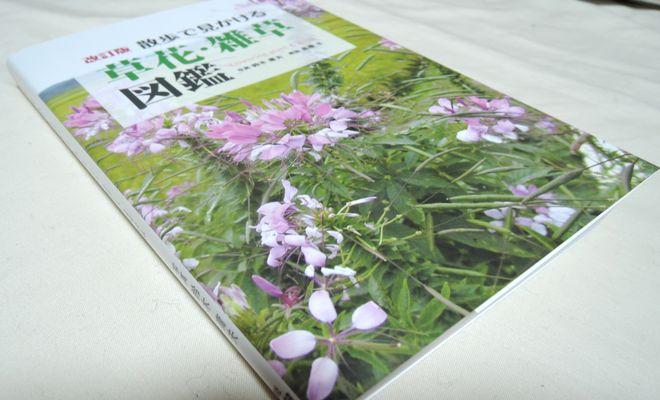 散歩で見かける草花・雑草図鑑(改訂版)